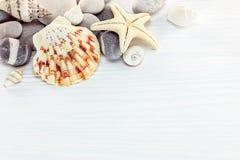 Морские звёзды с различными seashells и морской камешек на белом woode Стоковое Изображение RF