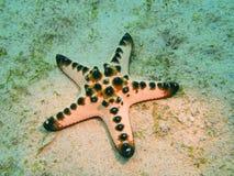 Морские звёзды Стоковое Изображение RF