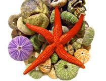 Морские звёзды, seashells Стоковые Изображения RF