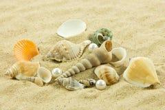 Морские звёзды жемчуга Seashells на море праздника песка Стоковое Изображение