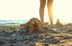 Морские звёзды закрывают вверх моря на заходе солнца Стоковые Фотографии RF
