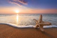 Морские звёзды и восходящее солнце Стоковые Изображения RF
