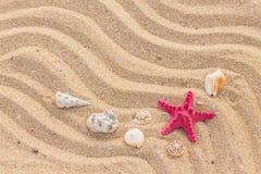 Морские звёзды и волна на песчаном пляже Стоковая Фотография RF