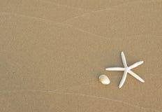 Морские звёзды и раковина Стоковая Фотография RF