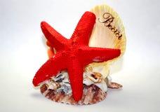 Морские звёзды и раковина Стоковые Фотографии RF