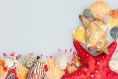 Морские звёзды и раковины Стоковое Фото