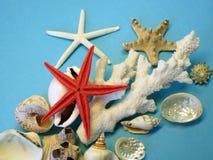 Морские звёзды и раковины стоковое изображение rf