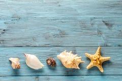 Морские звёзды и seashell на голубых досках Стоковое Изображение RF