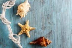 Морские звёзды и seashell на голубых досках Стоковое Изображение