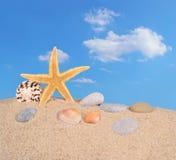 Морские звёзды и seashells на песке пляжа Стоковые Фото