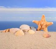 Морские звёзды и seashells на песке пляжа Стоковые Изображения