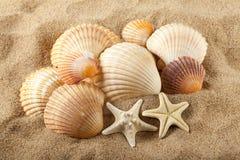 Морские звёзды и seashells на песке Стоковая Фотография RF