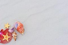 Морские звёзды и seashells на песке Стоковые Фотографии RF