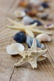 Морские звёзды и seashells Стоковая Фотография RF