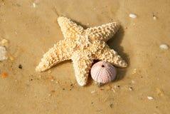 Морские звёзды на береге на Мексиканском заливе, Флорида, США стоковые фото
