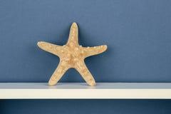 Морские звёзды на белой полке Стоковое Фото