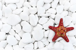 Морские звёзды на белых камнях Стоковые Фото