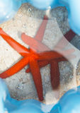 Морские звёзды на воде Стоковая Фотография