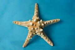 Морские звёзды на голубой предпосылке Стоковые Изображения