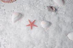 Морские звёзды на дне Стоковое Изображение