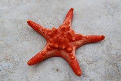 Морские звёзды на острове Phu Quoc, Вьетнаме Стоковые Фотографии RF