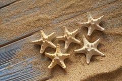 Морские звёзды на песке и планках Стоковые Изображения