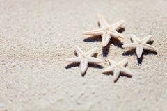 Морские звёзды на песке Стоковое Фото