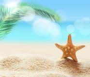 морские звёзды на песчаном пляже и ладони Стоковое Изображение RF
