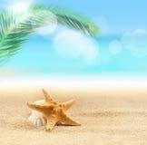 морские звёзды на песчаном пляже и ладони Стоковое Фото