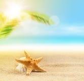 морские звёзды на песчаном пляже и ладони Стоковые Изображения