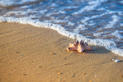Морские звёзды на песчаном пляже и море как символ каникул Стоковая Фотография