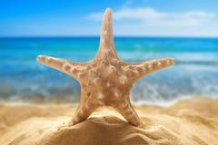 Морские звёзды на песчаном пляже Стоковые Изображения RF