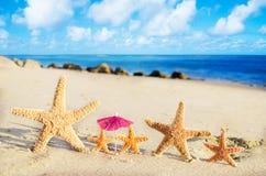 Морские звёзды на песчаном пляже Стоковое фото RF