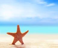 Морские звёзды на песчаном пляже Стоковые Изображения