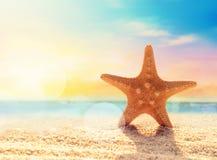 Морские звёзды на песчаном пляже Стоковое Фото
