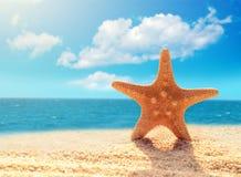 Морские звёзды на песчаном пляже Стоковые Фото