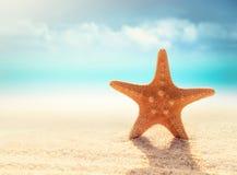 Морские звёзды на песчаном пляже Стоковая Фотография RF