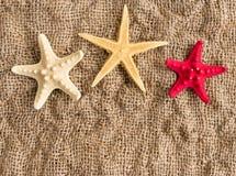 Морские звёзды на предпосылке льна с космосом для текста, знамени или рекламы Стоковая Фотография RF