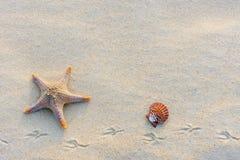 Морские звёзды на пляже на сумраке Стоковое фото RF