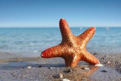 Морские звёзды на пляже Стоковая Фотография RF