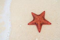 Морские звёзды на пляже Стоковое Фото
