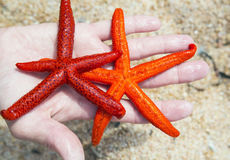 Морские звёзды на пляже Стоковое Изображение RF