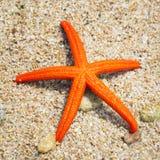 Морские звёзды на пляже Стоковая Фотография