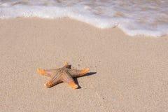 Морские звёзды на пляже Стоковые Изображения RF