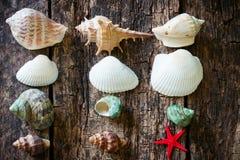 Морские звёзды, раковины, столбец улиток раковины на старом деревянном столе Стоковая Фотография