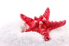 Морские звёзды снега Стоковая Фотография