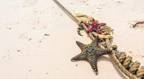 Морские звёзды с узлом на береговой линии стоковые фото