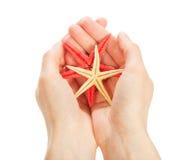 Морские звёзды цвета в руках Стоковое Изображение