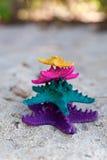 Морские звёзды цвета в троповом рае. Концепция каникул Стоковое Изображение
