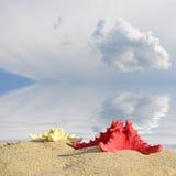 Морские звёзды цвета на песчаном пляже, концепции перемещения Стоковая Фотография